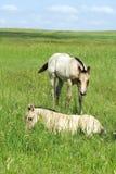 Ослята в поле Стоковая Фотография