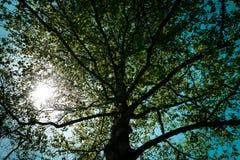 Осмотрите дерево снизу стоковые фотографии rf