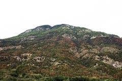 Осмотрите ландшафт леса и горы пока сезон падения лист дерева Стоковые Изображения