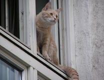 осмотрите окно Стоковая Фотография