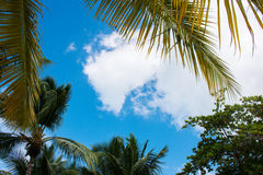 Осмотрите до неба под зеленой пальмой Стоковое Изображение RF