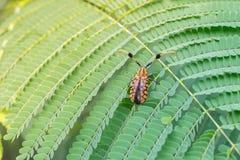 Осмотрите сторону воображения жука лонгхорна дома на зеленых лист Стоковая Фотография RF