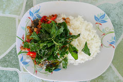 Основной пищевой продукт Таиланд, базилик стоковое изображение