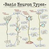 Основные типы нейронов Стоковое фото RF