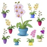 Colorful orchids on a white background stock photo