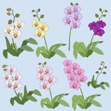 Set of Colorful orchids with leaves vector royalty free stock image