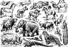 A large number of animals of wild africa presented in general illustration stock images