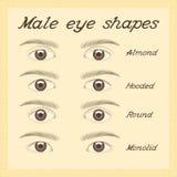 Various male eye shapes. stock illustration