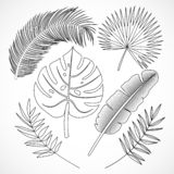 Palm leaves silhouette set outline royalty free illustration