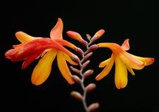 особенность природы красотки укореняет вал Стоковые Фотографии RF