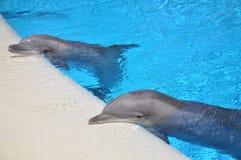 Остатки 2 дельфина Стоковое Изображение