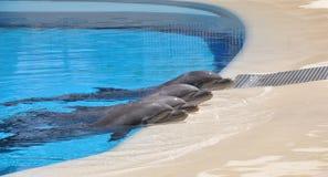 Остатки дельфина Стоковое Изображение RF