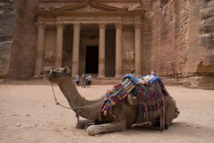 Остатки перед руинами казначейства Khazneh Al, Petra верблюда, Джордан Стоковое Фото