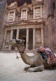 Остатки перед руинами казначейства Khazneh Al, Petra верблюда, Джордан Стоковое Изображение
