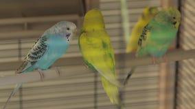Остатки Parrots клетка видеоматериал