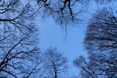 достижение неба Стоковое Изображение RF