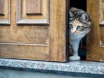 Осторожный кот на двери Заметьте беспристрастную съемку, узкую глубину поля, фокус Стоковое фото RF
