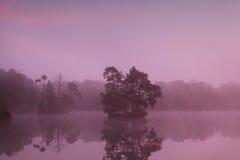 Острова дерева на озере на восходе солнца Стоковое Изображение RF