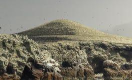 Острова Ballestas, декабрь 2016, Перу Стоковое Изображение