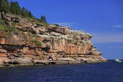 Остров Бонавентуры и северная колония в Gaspesie, Квебек Gannet Стоковые Фото