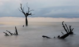 Остров быков Стоковое фото RF
