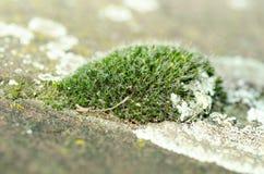 Остров зеленого мха на конкретном конце поверхности тропы вверх по селективному фокусу Стоковое фото RF