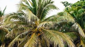 Остров кокоса ладоней кокоса Стоковые Фото