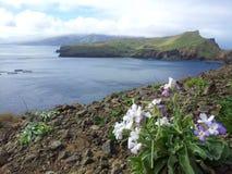 Остров Мадейры Стоковое Фото