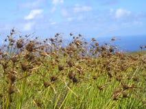 Остров пасхи - вулкан Kau Rano Стоковая Фотография