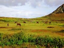 остров пасхи стоковое фото rf
