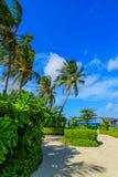 Остров растет высокорослые кокосовые пальмы Стоковые Фотографии RF