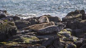 Остров Северная Ирландия Rathlin Стоковое фото RF