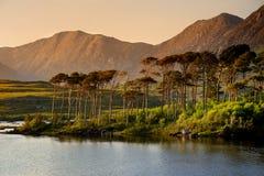 Остров 12 сосен, стоя на шикарной предпосылке сформированной острыми пиками горной цепи вызвал 12 Bens, графство Ga Стоковое Изображение RF