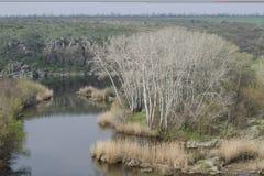 Остров с деревьями ольшаника стоковые фото