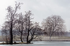 Остров с чуть-чуть деревьями в озере и тумане на overgrown береге Стоковые Фотографии RF