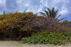 остров тропический отключение Варадеро стоковые фотографии rf