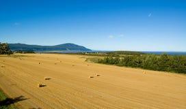 остров хлебоуборки orlean Стоковые Изображения RF