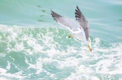 Остров & чайка Changdao стоковое изображение