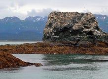 остров чайки птиц Стоковые Изображения RF