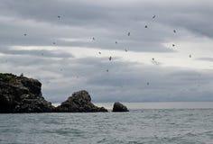 Остров чайки Стоковая Фотография RF