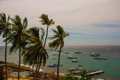 Остров Apo, Филиппины, взгляд на линии пляжа острова Пальмы, море и шлюпки Стоковое Изображение