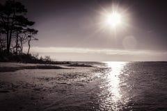 Остров Assateague стоковое изображение rf