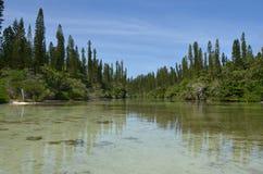 Остров Baie Oro Новая Каледония сосны стоковое изображение rf