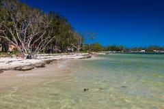 ОСТРОВ BRIBIE, AUS - 14-ОЕ ФЕВРАЛЯ 2016: Пляж с деревьями на западном s Стоковая Фотография