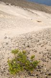 Остров Canaries Стоковое фото RF