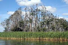 остров cormorants Стоковые Изображения RF