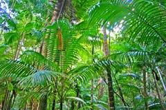 остров faser eli заводи Австралии Стоковые Фото