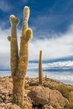 Остров Incahuasi, Салар de Uyuni, Боливия Стоковые Изображения