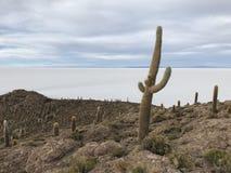 Остров Inkawasi в Uyuni Боливия, Южная Америка Стоковое Фото