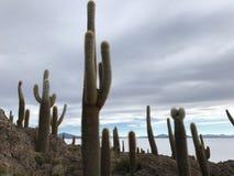 Остров Inkawasi в Uyuni Боливия, Южная Америка Стоковое Изображение RF